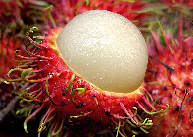 Health Benefits of Eating Rambutan Fruit - VegetaFruit