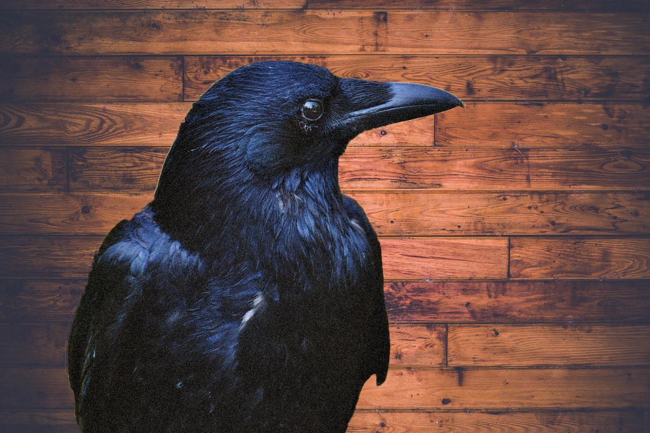 El Cuervo Edgar Allan Poe  Leer para crecer  Libros