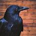 El Cuervo Edgar Allan Poe