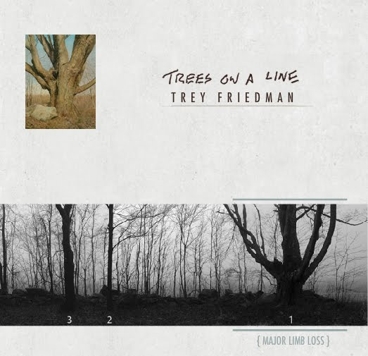 Trey Friedman Trees On A Line