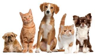 Realizará Coahuila feria de mascotas