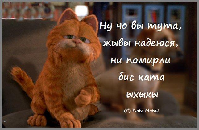 Блог Кота Моти  EBEdBaVWkAAWixC