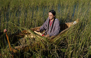 Great Lakes wild rice harvest
