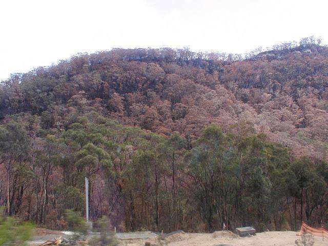 Burnt bushland near Sydney, Australia, 2002. Photographed by Susan Walter.