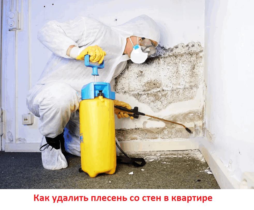 Как удалить плесень со стен в квартире