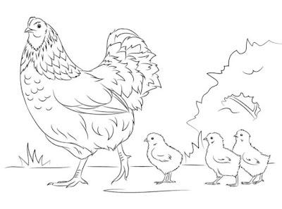 gambar sketsa ayam dan anaknya