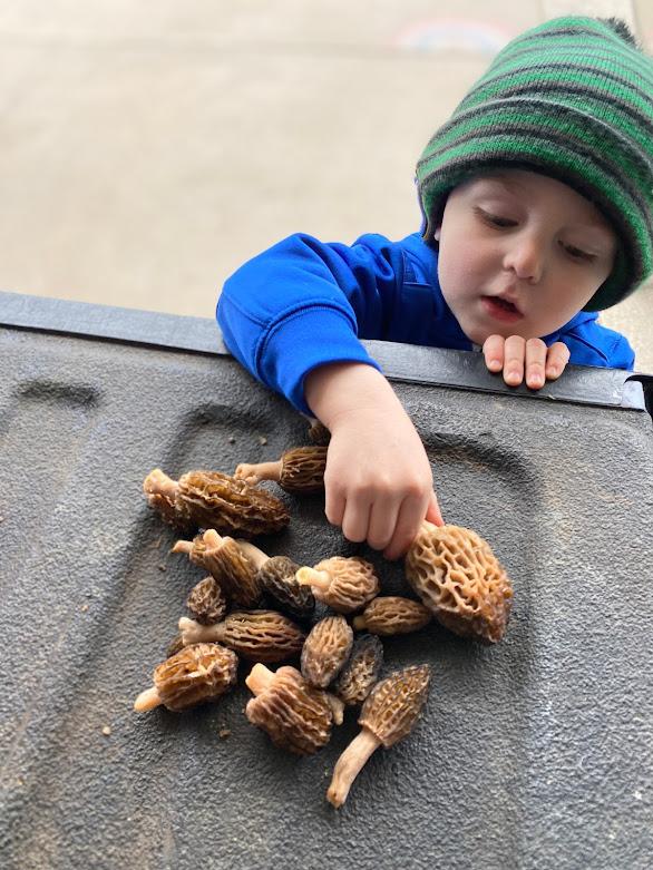 Morel mushrooms   My Darling Days Blog