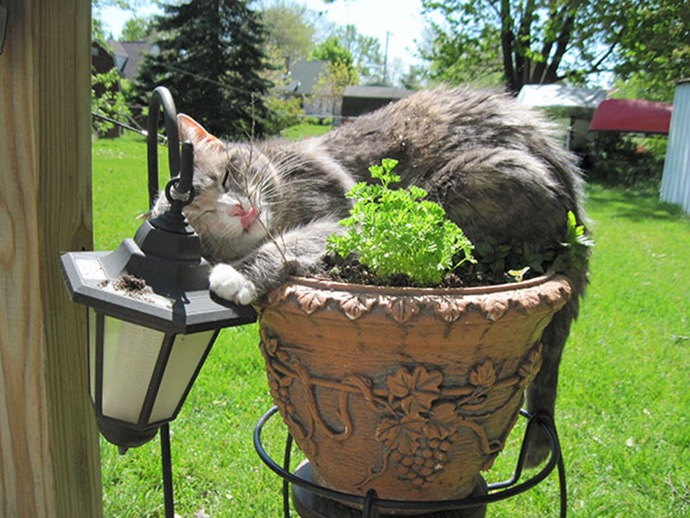 4. This pot comes with it's own pillow!