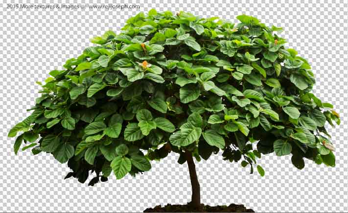 PNG Tree 00001
