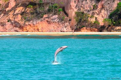 Image result for Baía dos Golfinhos pipa