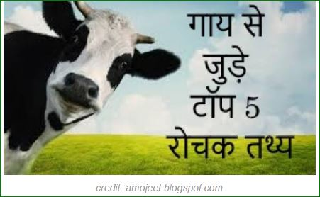 Top-5 facts-related-to-cow-in-hindi