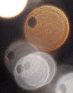 hole in orange orb
