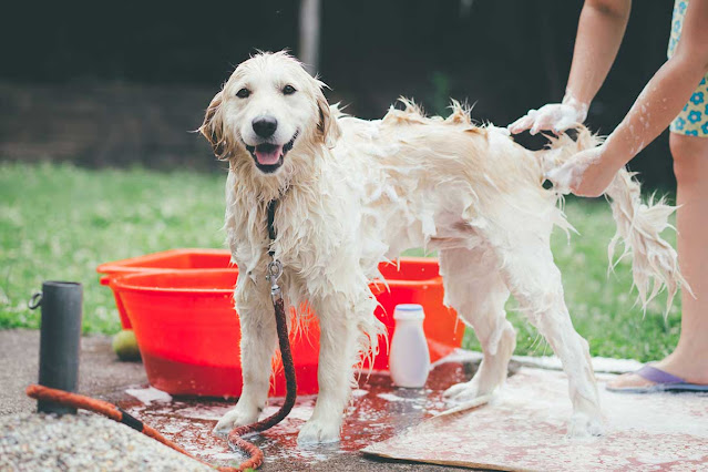 Why Does My Dog Stink? Common Causes of Dog Odor
