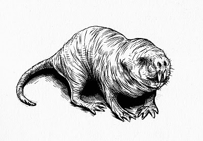 pretty good blog: Warm up Sketch : Naked Mole Rat