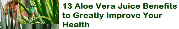 13 Aloe Vera Juice Benefits to Greatly Improve Your Health