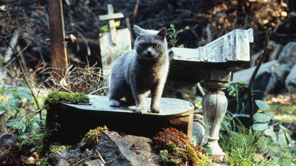 Кладбище домашних животных, Pet Sematary, будет новая экранизация от режиссёра Оно и Мама, IT, Mama, Андрес Мускетти, Стивен Кинг, Ужасы, Хоррор, Horror