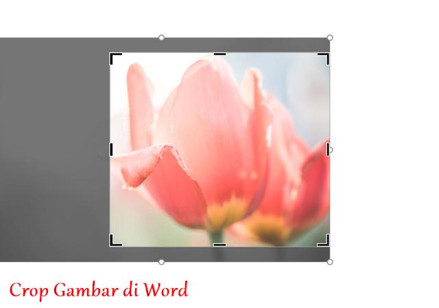 cara crop gambar di microsoft word