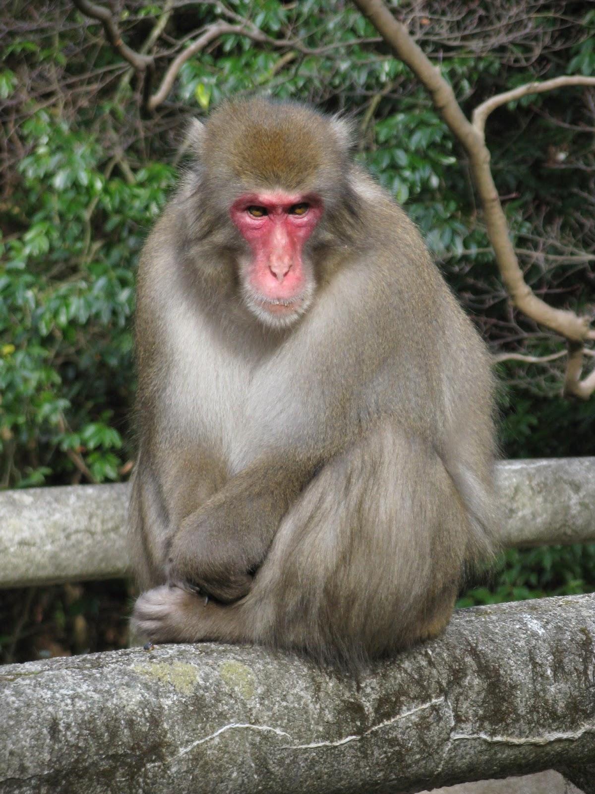 Resultado de imagen de Jinmenken cara de humano