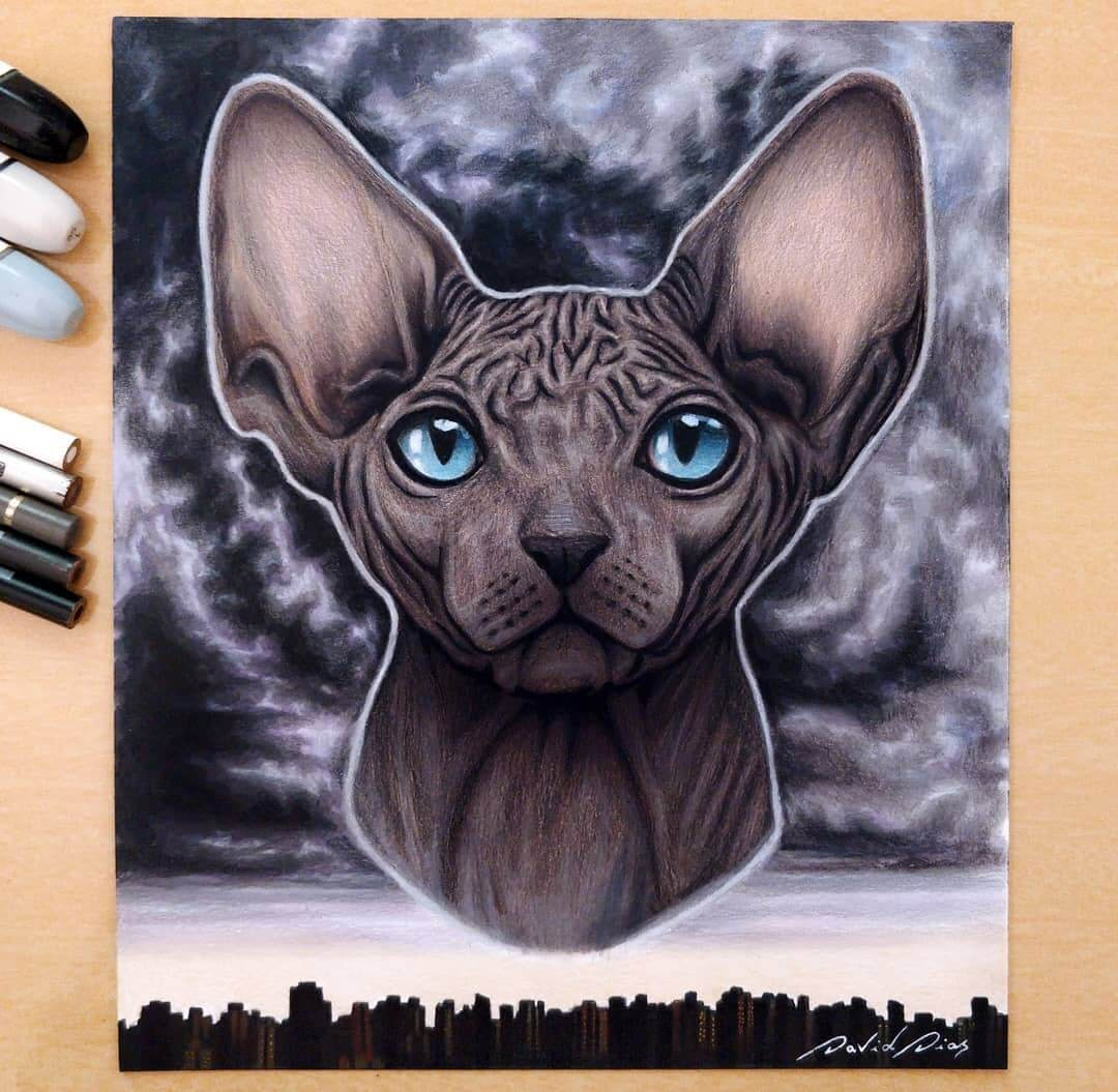 12-Sphynx Cat-David-Dias-Drawings-Spanning-Many-different-Subjects-www-designstack-co