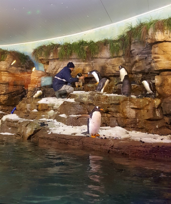 pinguinos-juanito