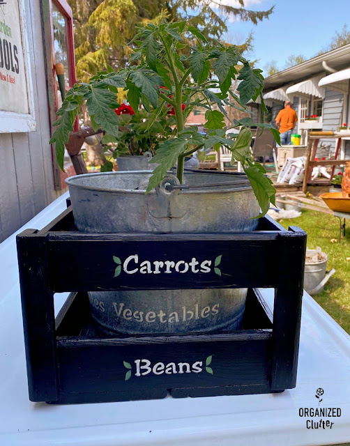 Photo of cherry tomato planted inside a stenciled crate & bucket