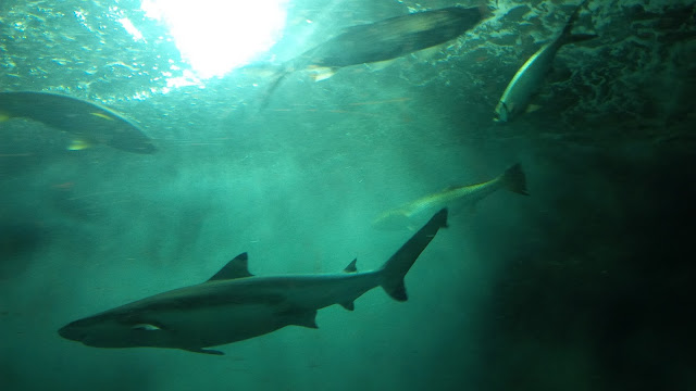 10 Singapore Fun Activities - Sharks at Underwater World Singapore