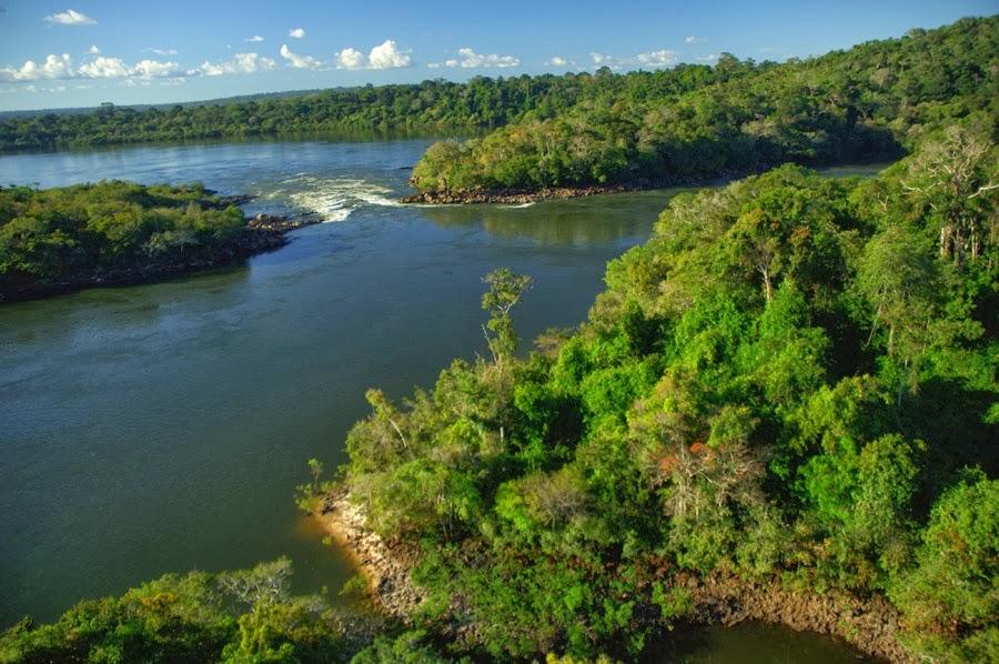 amazon rainforest south america - photo #19