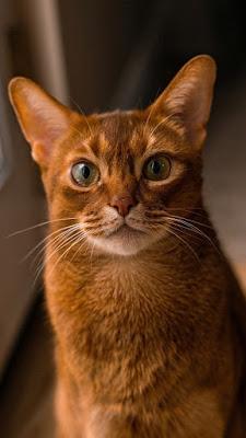 خلفيات للجوال قطط