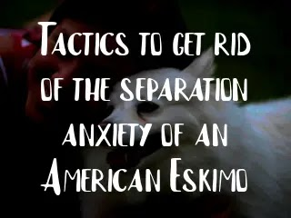 Tactics to get rid of the separation anxiety of an American Eskimo