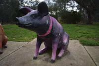 Albury Public Art | Kade Albury Street Art | Logans Rd Dog park mural by Kade Sarte