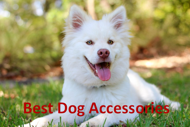 best dog accessories online, dog accessories amazon, dog food amazon, dog chain amazon, dog bowl, online dog accessories