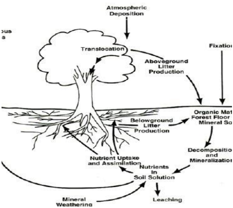 The function, structure and major component of Forest Ecosystem