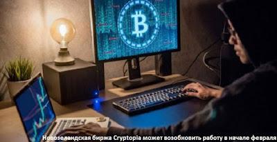 Новозеландская биржа Cryptopia может возобновить работу в начале февраля