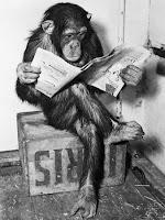 Mono leyendo un periódico.