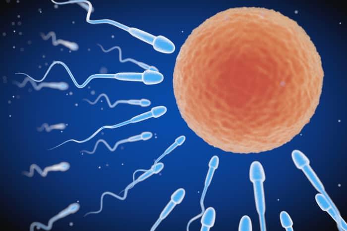 Proses Terjadinya Kehamilan: Dari Hubungan Intim Hingga Jadi Janin