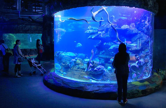 Banyak atraksi seru di Seaworld
