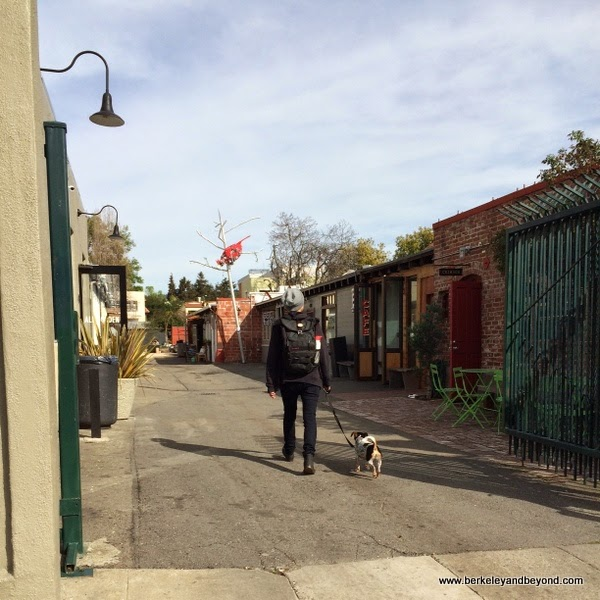 Temescal Alley in Oakland, California