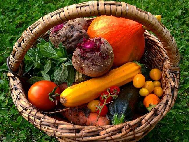 Vegan Diet Deficiencies - Nutrients You Are Missing if You are Vegan?