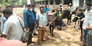 53 लाभार्थियों को गोशाला से दी गई एक—एक गायें | #NayaSaveraNetwork
