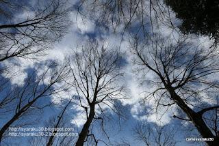 木々と冬空の写真
