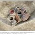 Evidência de consumo de cerveja há 9 mil anos no sul da China: Hipótese da Cerveja?