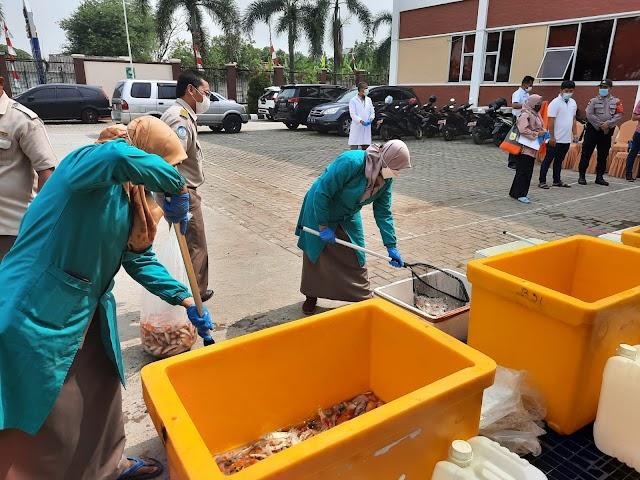 Bawa Penyakit,  4.557 Ekor Ikan Koi Impor Dimusnahkan