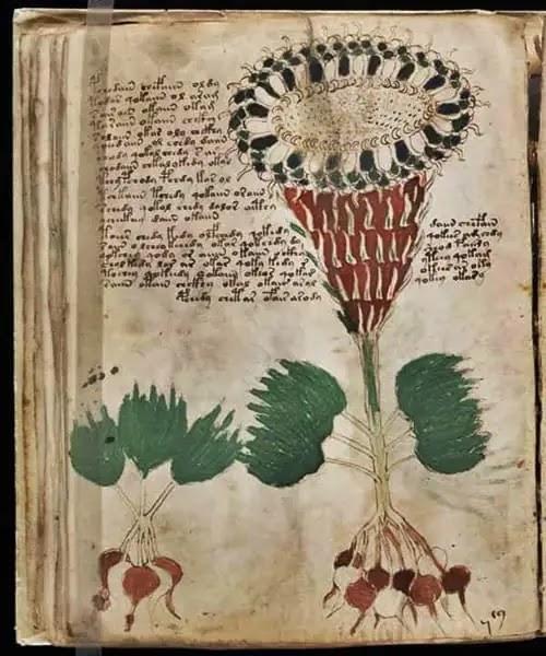 voynich manuscript in hindi - mysterious books in hindi