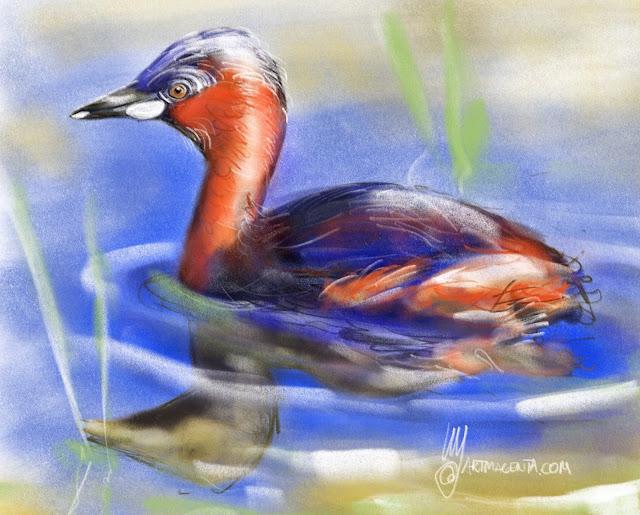 Little grebe bird painting by Artmagenta