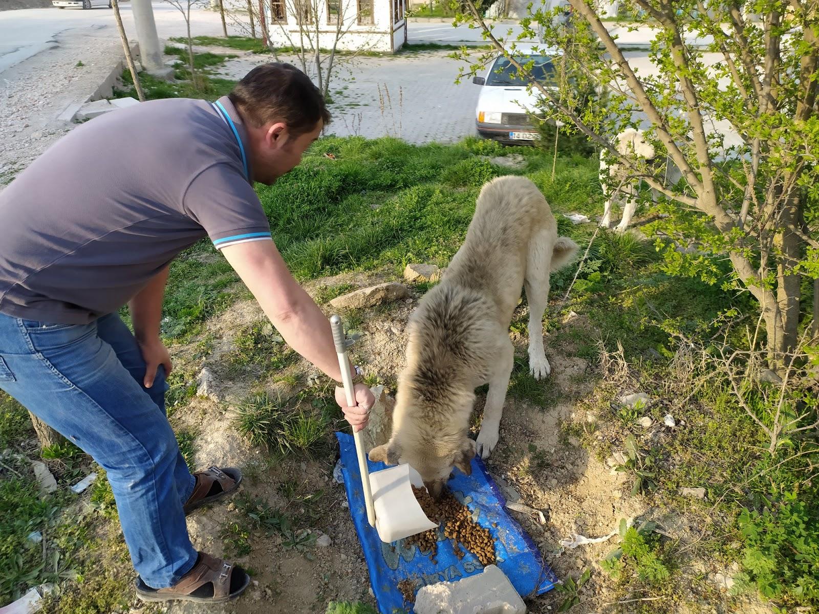 Mudurnu Offroad Sokak Hayvanları Yem Dağıtımı