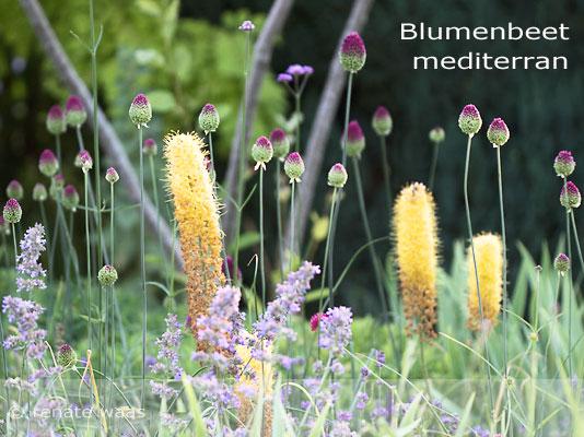 Bepflanzung mediterraner Garten - Staudenbeete, Blumenbeete, Gartenplanung Renate Waas
