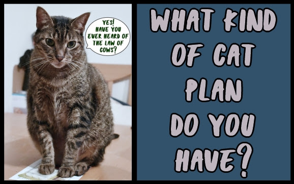 What kind of cat plan do you have?