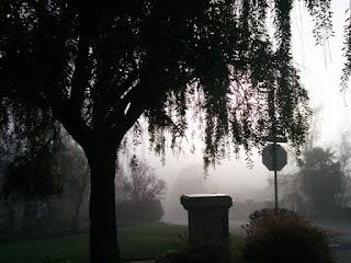 Trees silhouetted in dense fog, Saratoga, California