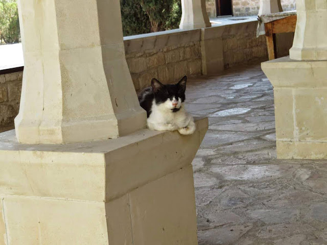 Cyprus Road Trip: Cat Napping at St. Nicholas of the Cats