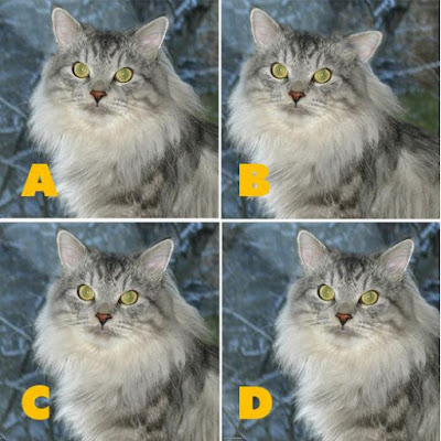 Which image is different? image 6